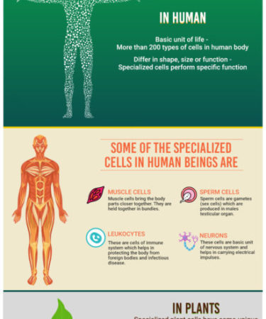 Specialized-Cells-infograph1